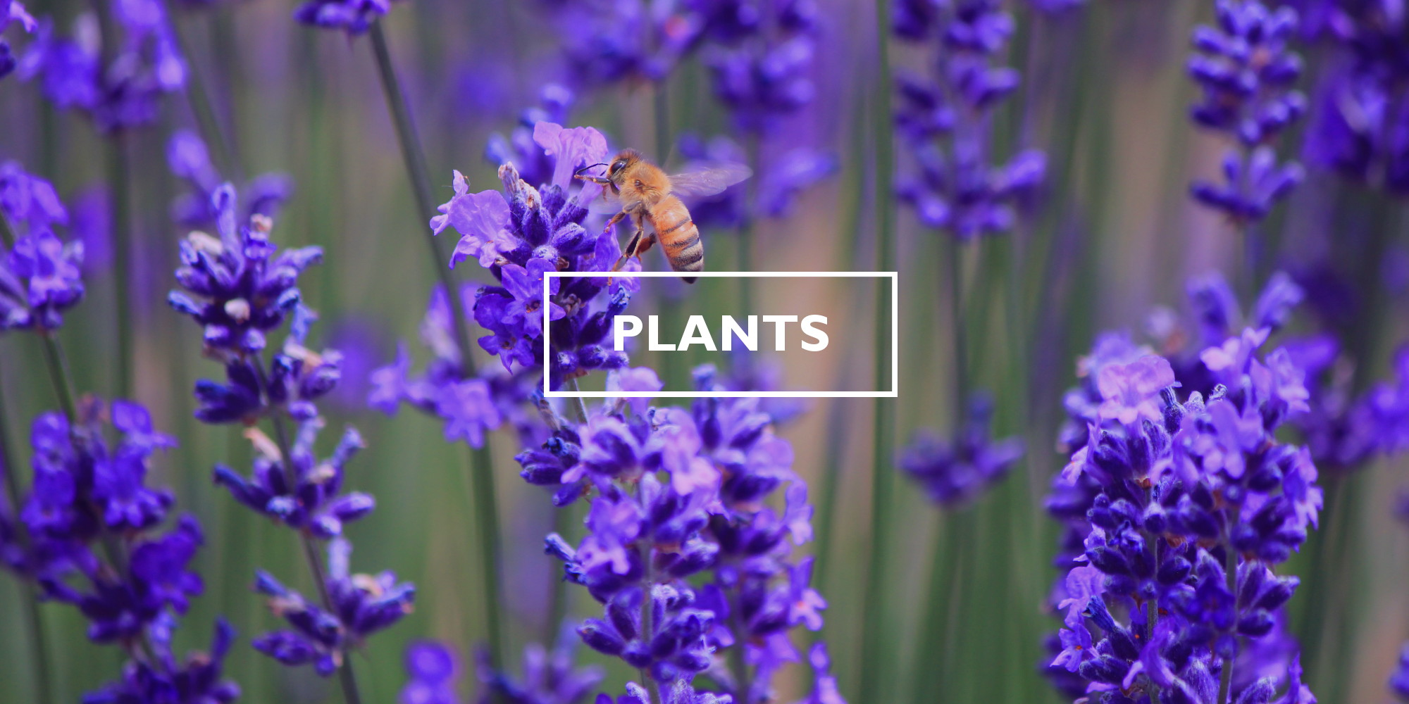 Botany - Wikipedia